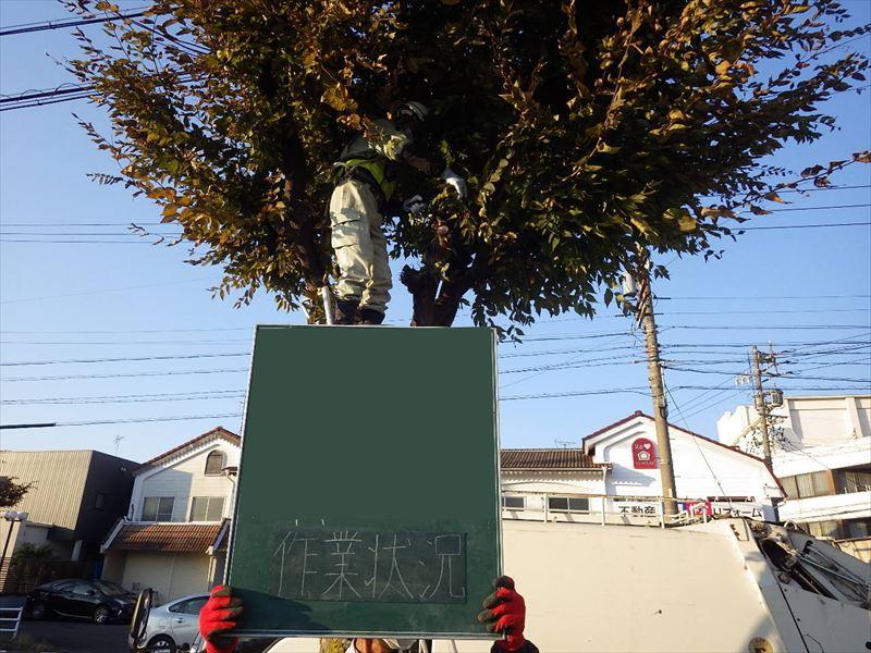 12右-1 ケヤキ作業状況_R